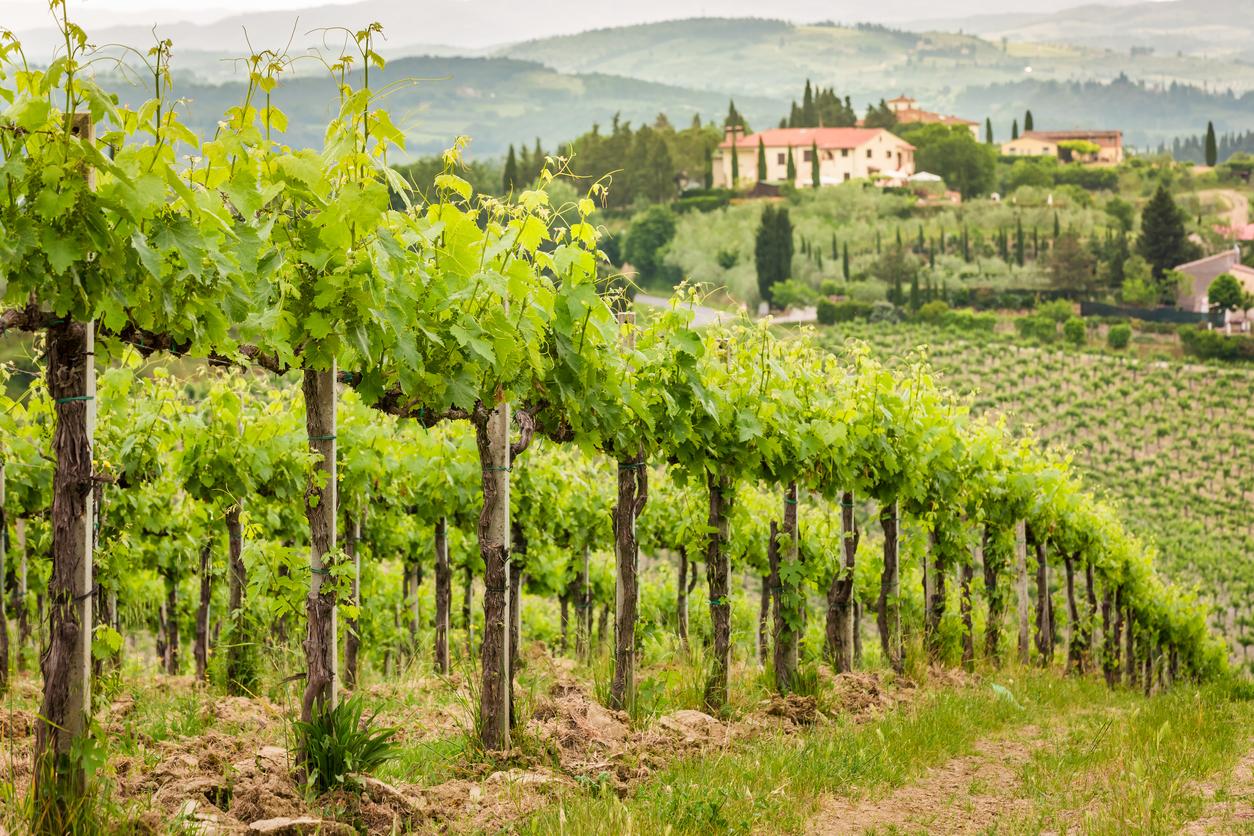 Resor till vingårdar